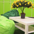 ���� ����� Green Hostel No Category