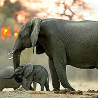 Фото отеля Savute Elephant Camp 5*