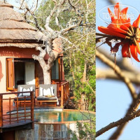 Фото отеля Thanda Private Game Reserve 5*