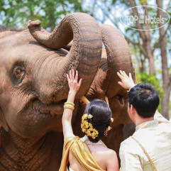 Anantara Golden Triangle Resort & Elephant Camp