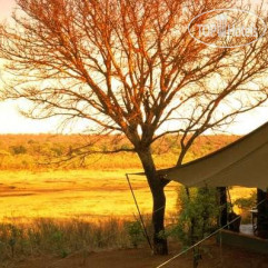 Matetsi Safari Camp