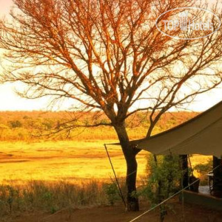 Фото Matetsi Safari Camp