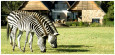 Фото Harare Safari Lodge 4* / Зимбабве / Хараре