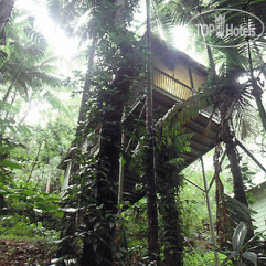 Daintree Eco Lodge & Spa 4*
