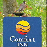 Фото отеля Comfort Inn Yosemite Valley Gateway 2*