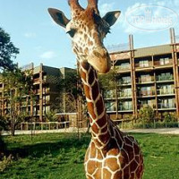 Фото отеля Disney's Animal Kingdom Lodge 4*