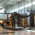 Апатозавр.