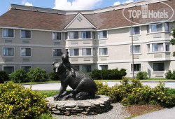 Black Bear Inn Conference Center & Suites 3*