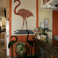 Фото отеля Flamingo Beach 3*