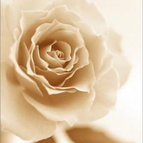 """Схема вышивки  """"Подушка  """"Розовая роза.  Портал  """"Вышивка крестом """".  Предпросмотр.  Мармеладка."""