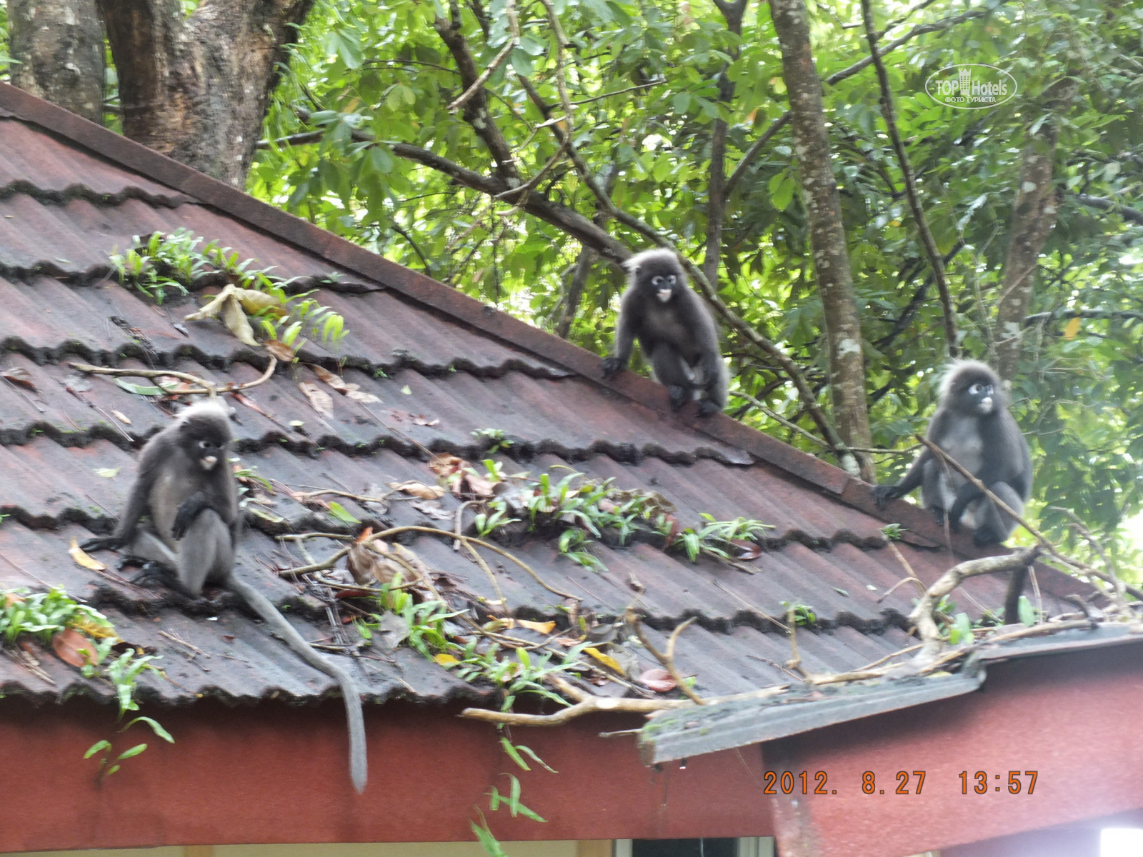 All photos отеля Mutiara Burau Bay Beach Resort Langkawi 4*. Rating ...