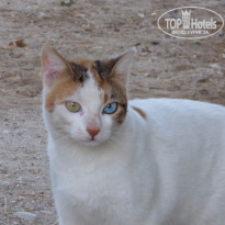 Фото отеля Leonardo Inn 3* Israel Dead dea Ein-Bokek two colors eyes cat