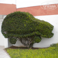 ���� ����� Al Moggar Garden Beach Club 4* � ������, �������