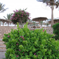 Фото отеля Coral Beach Resort Tiran 4*