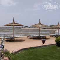 Фото отеля Beach Albatros Resort 4* Море отеля Albatros Palace
