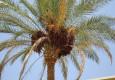 туристическая путевка Египет 4 звезды