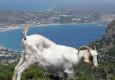 молодежный отдых Греция недорого