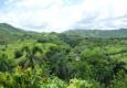 курорт в Доминикану отзывы