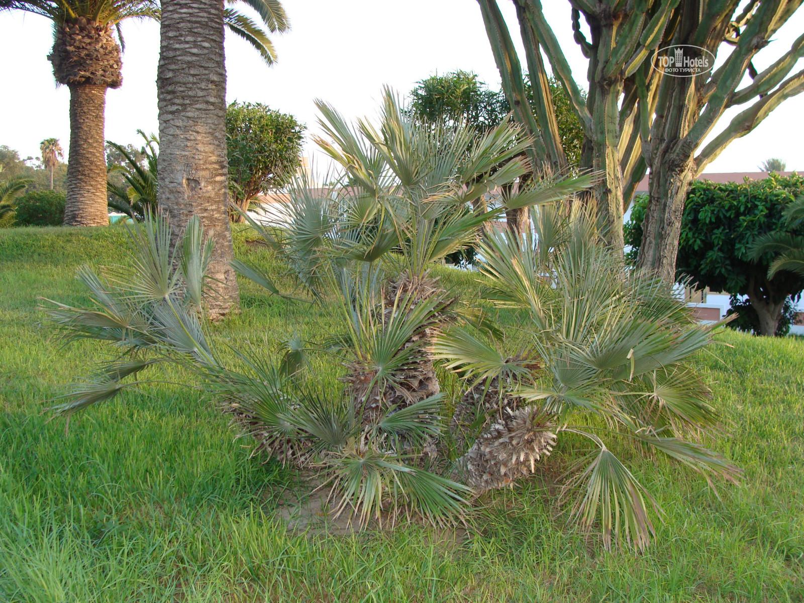 Все фотографии: Вид из номера отеля Al Moggar Garden Beach Club 4 ...