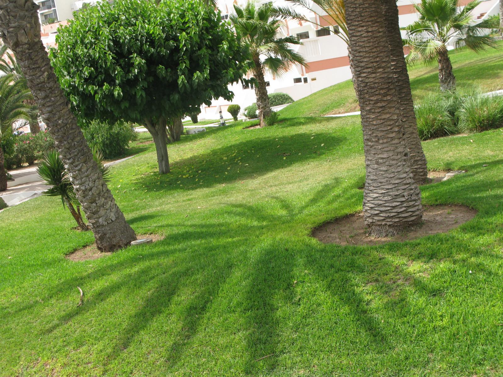 Все фотографии отеля Al Moggar Garden Beach Club 4*. Рейтинг отелей ...