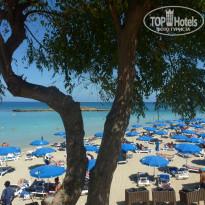 Пляж fig tree фото