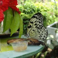 все надо сад бабочек пхукет отзывы ЧТОБЫ ВАШИ СТАТЬИ